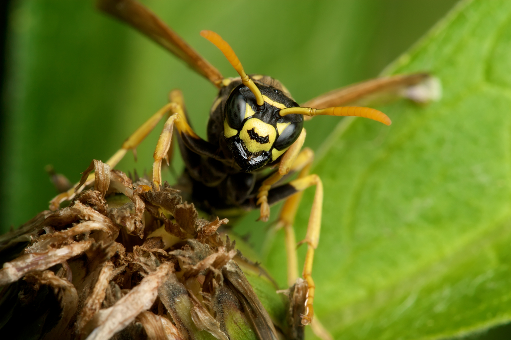 Do Insects Have Emotions and Empathy? | Brain Blogger